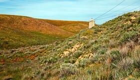 Χρυσές παπαρούνες Καλιφόρνιας στην υψηλή έρημο νότιας Καλιφόρνιας Στοκ φωτογραφίες με δικαίωμα ελεύθερης χρήσης