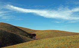 Χρυσές παπαρούνες Καλιφόρνιας στην υψηλή έρημο νότιας Καλιφόρνιας Στοκ Φωτογραφίες