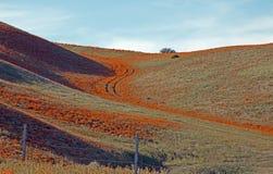 Χρυσές παπαρούνες Καλιφόρνιας στην υψηλή έρημο νότιας Καλιφόρνιας Στοκ εικόνες με δικαίωμα ελεύθερης χρήσης