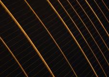 Χρυσές σειρές Στοκ φωτογραφία με δικαίωμα ελεύθερης χρήσης
