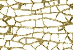 χρυσές φλέβες στοκ εικόνες