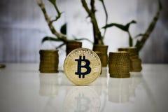 Χρυσή έννοια νομισμάτων bitcoin Στοκ φωτογραφίες με δικαίωμα ελεύθερης χρήσης