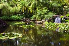 Χρυσή λίμνη ψαριών στον τροπικό βοτανικό κήπο της Χαβάης Στοκ εικόνες με δικαίωμα ελεύθερης χρήσης