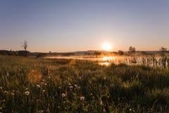 Χρυσή ανατολή της Misty που απεικονίζει πέρα από καλυμμένα τα πικραλίδα λιβάδια α στοκ εικόνες