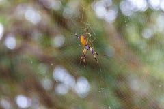Χρυσή αράχνη σφαίρα-υφαντών Στοκ Εικόνες