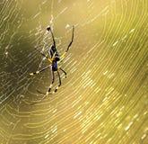 Χρυσή αράχνη σφαιρών στοκ εικόνες με δικαίωμα ελεύθερης χρήσης