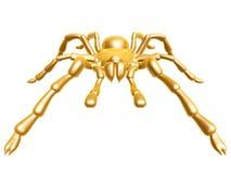 χρυσή αράχνη Στοκ Εικόνες