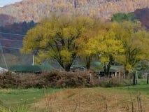 Χρυσή βόρεια Καρολίνα κοιλάδων της Maggie δέντρων τον Οκτώβριο Στοκ Φωτογραφία