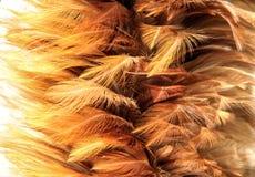 χρυσή γούνα από το φτερό Στοκ Εικόνες