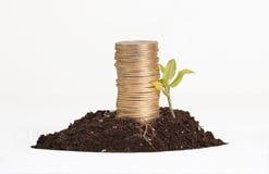 Χρυσή επένδυση, εννοιολογική στοκ φωτογραφία με δικαίωμα ελεύθερης χρήσης