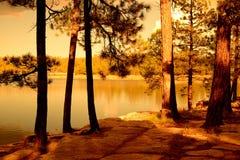 Χρυσή ελαφριά δασική λίμνη Στοκ φωτογραφίες με δικαίωμα ελεύθερης χρήσης