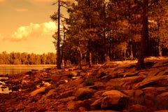 Χρυσή ελαφριά δασική λίμνη Στοκ Εικόνες