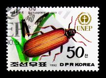 Χρυσή καθαρός-φτερωτή αυγή Dictyoptera κανθάρων, UNEP - ημέρα παγκόσμιου περιβάλλοντος: Χλωρίδα και πανίδα serie, circa 1992 Στοκ Φωτογραφίες
