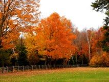 Χρυσή και πορτοκαλιά άδεια του φθινοπώρου σε μια πλευρά χωρών στοκ εικόνα με δικαίωμα ελεύθερης χρήσης