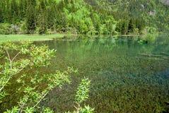 Χρυσή λίμνη κουδουνιών Jiuzhaigou Στοκ Εικόνες