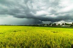Χρυσή μετακίνηση σύννεφων βροχής τομέων ρυζιού Στοκ φωτογραφίες με δικαίωμα ελεύθερης χρήσης