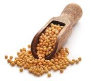 Χρυσή μουστάρδα στοκ εικόνα με δικαίωμα ελεύθερης χρήσης