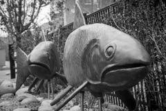χρυσή πέστροφα Στοκ Φωτογραφίες
