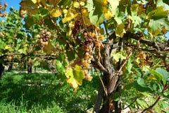 Χρυσή πύλη Burgundy, χωριό Chablis στην περιοχή Bourgogne, διάσημο για το άσπρο κρασί στοκ φωτογραφίες