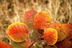 χρυσή σειρά φθινοπώρου Στοκ Εικόνες