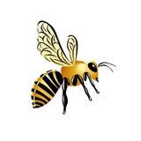Χρυσή στιλπνή διευκρινισμένη σφήκα, ριγωτό κίτρινο έντομο στη λευκιά ΤΣΕ απεικόνιση αποθεμάτων