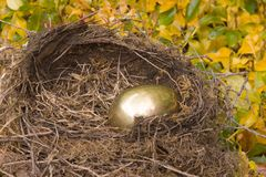 χρυσή φωλιά αυγών Στοκ Εικόνες