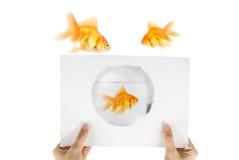 Χρυσή φωτογραφία ψαριών Στοκ φωτογραφία με δικαίωμα ελεύθερης χρήσης