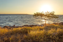 Χρυσή ώρα στην παραλία Στοκ Φωτογραφία