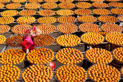 χρυσή persimmons αγροτών εργασία Στοκ εικόνα με δικαίωμα ελεύθερης χρήσης