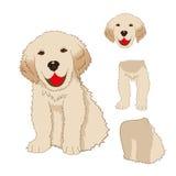 Χρυσή Retriever κουταβιών συνεδρίαση, χαμόγελο του Λαμπραντόρ σκυλιών μωρών Ευχετήρια κάρτα στο άσπρο υπόβαθρο διανυσματική απεικόνιση