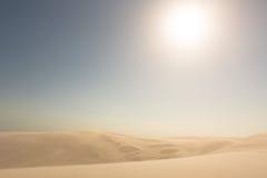 Χρυσοί αμμόλοφοι άμμου. Στοκ Φωτογραφίες