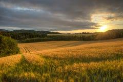 Χρυσοί τομείς καλαμποκιού Στοκ εικόνα με δικαίωμα ελεύθερης χρήσης