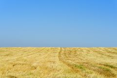 Χρυσοί τομείς σίτου μετά από τη συγκομιδή και το μπλε ουρανό στην ηλιόλουστη ημέρα στοκ εικόνες