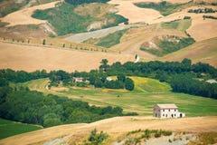 Χρυσοί λόφοι τομέων σίτου με τα αγροτικά σπίτια σε μια ηλιόλουστη ημέρα Στοκ Εικόνες