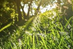 Χρυσός ήλιος πέρα από έναν τομέα λουλουδιών Στοκ Φωτογραφίες