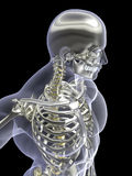 χρυσός ασημένιος σκελετός Χ ακτίνων Στοκ φωτογραφία με δικαίωμα ελεύθερης χρήσης