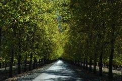 χρυσός δρόμος Στοκ εικόνες με δικαίωμα ελεύθερης χρήσης