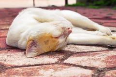 Χρυσός-διευθυνμένος οκνηρός χρόνος της γάτας Στοκ εικόνες με δικαίωμα ελεύθερης χρήσης