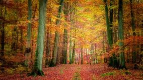 Χρυσός και καφετής στο δάσος το φθινόπωρο, Πολωνία Στοκ φωτογραφία με δικαίωμα ελεύθερης χρήσης