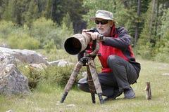Χρυσός-καλυμμένος επίγειος σκίουρος που παρατηρεί έναν φωτογράφο άγριας φύσης Στοκ Φωτογραφίες