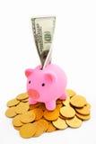 χρυσός νομισμάτων τραπεζών piggy Στοκ Εικόνες