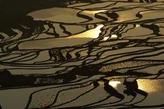 χρυσός ορυζώνας πεδίων Στοκ φωτογραφία με δικαίωμα ελεύθερης χρήσης