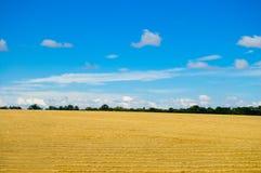 χρυσός πεδίων στοκ φωτογραφία με δικαίωμα ελεύθερης χρήσης