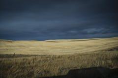 Χρυσός που χρωματίζεται από τους τομείς σίτου ήλιων στον Καναδά στοκ φωτογραφία