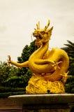 Χρυσός δράκος Στοκ Εικόνες
