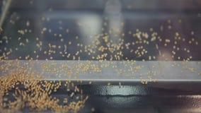 Χρυσός σπόρος που ρέει στη μηχανή φιλμ μικρού μήκους