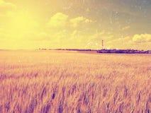 Χρυσός τομέας απογεύματος του κριθαριού Η The Sun επάνω από τον ορίζοντα βερνικώνει πέρα από ένα νέο κριθάρι Στοκ φωτογραφία με δικαίωμα ελεύθερης χρήσης