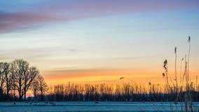 Χρυσός χειμερινός ήλιος στα χιονώδη παγωμένα μάντρα δέντρα Στοκ Εικόνες