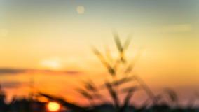 Χρυσός χειμερινός ήλιος στη μουντή χλόη Στοκ φωτογραφία με δικαίωμα ελεύθερης χρήσης