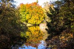 Χρυσός χρόνος φθινοπώρου σε ένα γερμανικό πάρκο Στοκ εικόνες με δικαίωμα ελεύθερης χρήσης